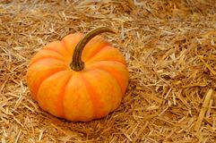 Autumn Scenery Pumpkin foto de stock royalty free