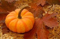 Autumn Scenery Pumpkin stock photography