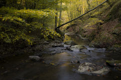 Autumn scenery with river trough yellow forest Stock Photography