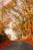 Autumn scenery with a road Royalty Free Stock Images