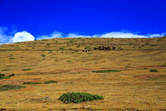 The autumn scenery on the road to Qinghai Tibet Plateau Royalty Free Stock Photo