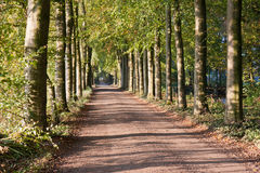 Autumn scenery of rural lane Stock Photos