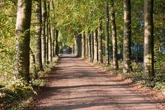 Autumn scenery of rural lane Stock Photos
