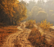 Autumn scenery of rural lane on a foggy morning Stock Images