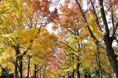 Autumn scenery Royalty Free Stock Image