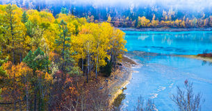 Autumn scenery, Sleeping Dragon Bay, Kanas, China Royalty Free Stock Photos