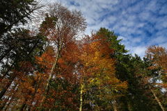 Autumn scenery in the Sumava Mountains, Czech Republic Stock Image