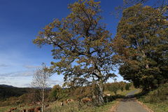 Autumn scenery in the Sumava Mountains, Stodulky, Czech Republic Stock Photo