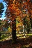 Autumn scenery in the Sumava Mountains, Stodulky, Czech Republic Stock Photos