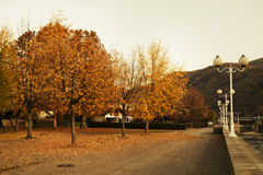 Autumn Scenery in a Town Stock Photography