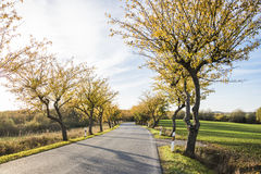 Autumn Scenery variopinto Fotografia Stock