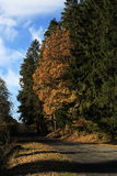 Autumn scenery in the vicinity of Hartmanice, Czech republic Royalty Free Stock Photography