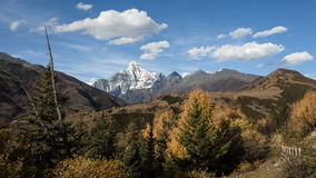 The autumn scenery of Yading Royalty Free Stock Image