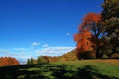 Autumn scenes Royalty Free Stock Photo