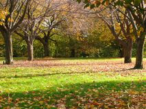 Autumn Scenic Royalty Free Stock Photography