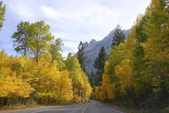 Autumn scenic. Road winding through colored trees in the High Sierras Royalty Free Stock Photography