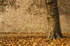Autumn scenic Royalty Free Stock Images