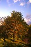 Autumn scenic. Picture of a beautiful Autumn scenic Stock Photos
