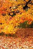 Autumn scenic Royalty Free Stock Photography