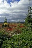 Autumn scenic. @ Dolly Sods, Monongahela NF, West Virginia stock image