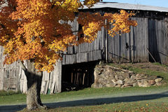Autumn Scenic Maple Foliage and Barn Royalty Free Stock Photography