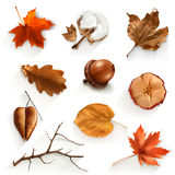 Autumn scrap elements. Set with autumn scrap, vector elements, isolated on white background Royalty Free Stock Photos