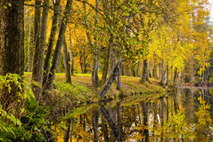 Autumn Sea. A sea with trees in autumn colors Royalty Free Stock Images