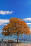 Autumn by the sea side Stock Images