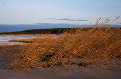 Autumn, seacoast. Grass on the beach Royalty Free Stock Images