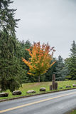 Autumn At Seahurst 2 stock image