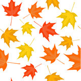Autumn seamless Royalty Free Stock Photos