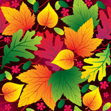 Autumn seamless background. With leafs Royalty Free Stock Photo