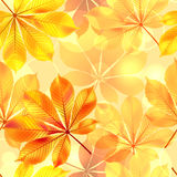 Autumn seamless background with leaves. Vector Royalty Free Stock Image