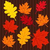 Autumn seamless colorful pattern with leaves,  ill Stock Photos