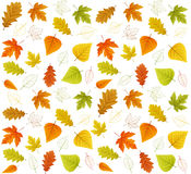 Autumn seamless  leaf pattern Stock Photo