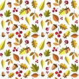 Autumn Seamless Pattern Background Yellow lascia la stagione di caduta dell'ornamento Fotografia Stock