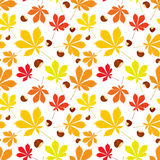 Autumn seamless pattern of chestnut leaves and nuts on white background. Cover design. Colorful vector illustration Vector Illustration
