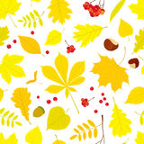 Autumn seamless pattern of different tree leaves Stock Image