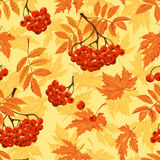 Autumn seamless pattern with leaves and ashberry. Vector illustration. Royalty Free Stock Photography
