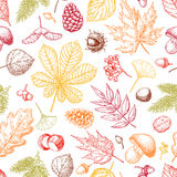Autumn seamless  pattern with leaves, berries, fir cones, Royalty Free Stock Photos
