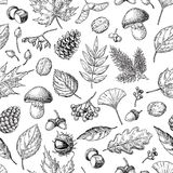 Autumn seamless  pattern with leaves, berries, fir cones,. Nuts, mushrooms and acorns. Detailed forest botanical background. Vintage fall seasonal decor. Oak Stock Photography