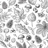 Autumn seamless  pattern with leaves, berries, fir cones,. Nuts, mushrooms and acorns. Detailed forest botanical background. Vintage fall seasonal decor. Oak Stock Photo