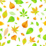 Autumn seamless pattern with leaves  EPS 10.  Royalty Free Stock Images