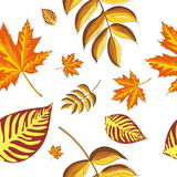 Autumn seamless pattern with leaves. Vector illustration Stock Photos