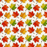 Autumn seamless pattern with maple leaves. Vector background. Royalty Free Stock Photos