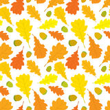 Autumn seamless pattern of oak leaves and acorns on white background. Cover design. Stock Image