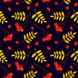 Autumn seamless pattern with red and orange Rowan berries and leaves. Vector illustration. Stock Photo