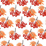 Autumn seamless pattern with rowan berries. Nature background.  Fall colorful floral background. Elegant floral seamless pattern Stock Image