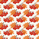 Autumn seamless pattern with rowan berries. Vector background. Stock Photography