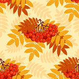 Autumn seamless pattern with rowan. Leaves and berries. Vector illustration Stock Photo